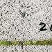 Graue Wegplatten nah, in den Rillen grünes Moos, darauf handgeschrieben die Jahreszahl 2013